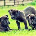 Consejos a tener en cuenta antes de adoptar un perro