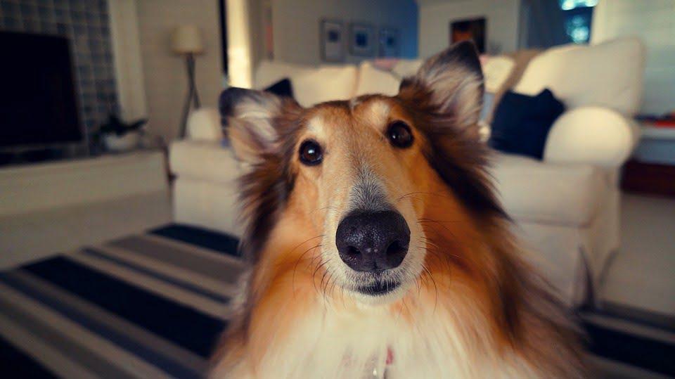 Consejos para adoptar un perro